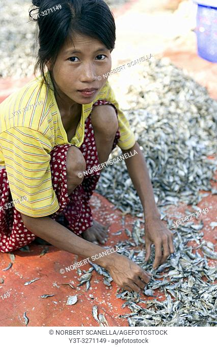 Myanmar (ex Birmanie). Ngapali. Arakan state. Bengal Golf Course. Fisherman village. Woman working at drying fish