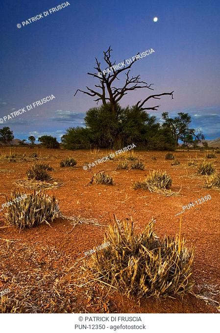 A moody landscape of a dead tree at dusk with moon surrounded by red soil and shrubs