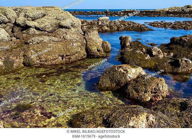 Tidal pools  Laredo, Cantabria, Spain