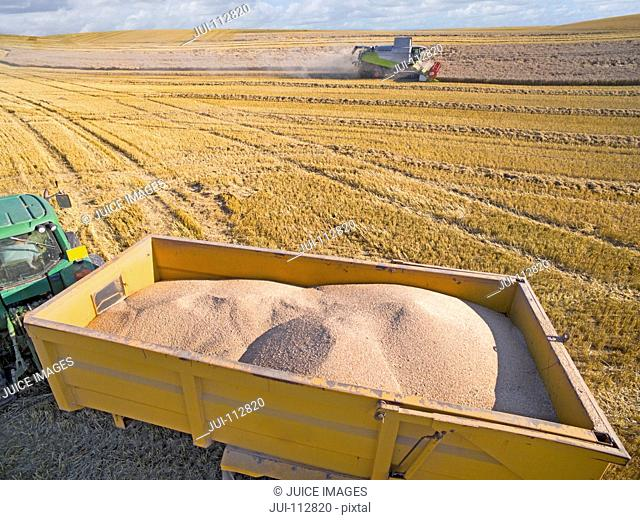 Aerial view of tractor trailer carrying harvested barley in sunny field