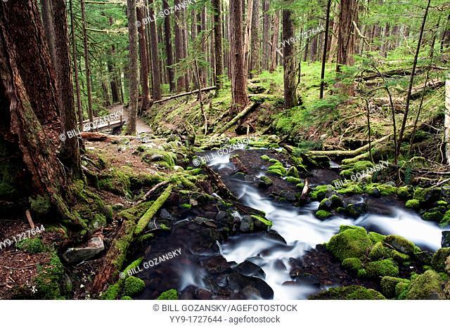 Creek near Sol Duc Falls - Olympic National Park, near Port Angeles, Washington, USA
