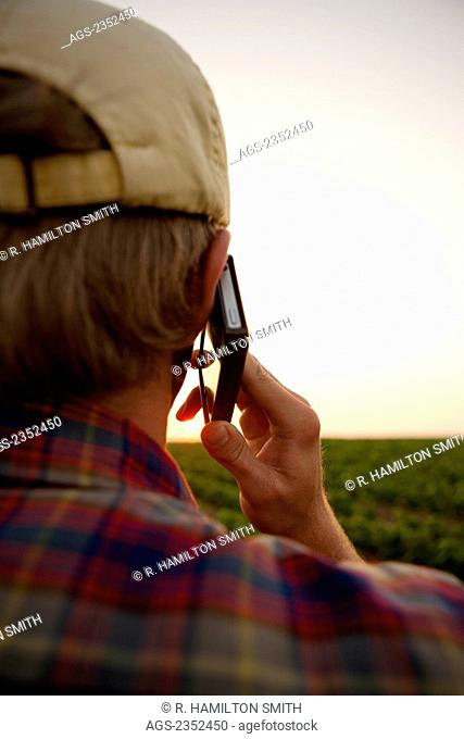 Agriculture - A young farmer in a soybean field at sunset talking on his Apple iPhone. This represents the next generation of young farmers using the latest...