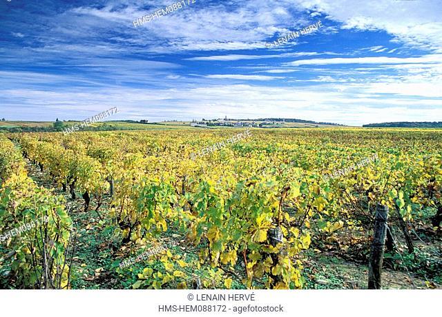 France, Nievre, Pouilly sur Loire village, vineyard in autumn