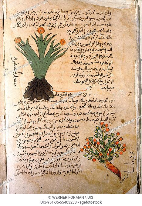 Folio 5v of the Arabic version of Dioscorides De Materia Medica