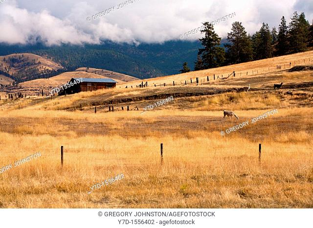 A Llama farm with plenty of room for grazing in Plains, Montana