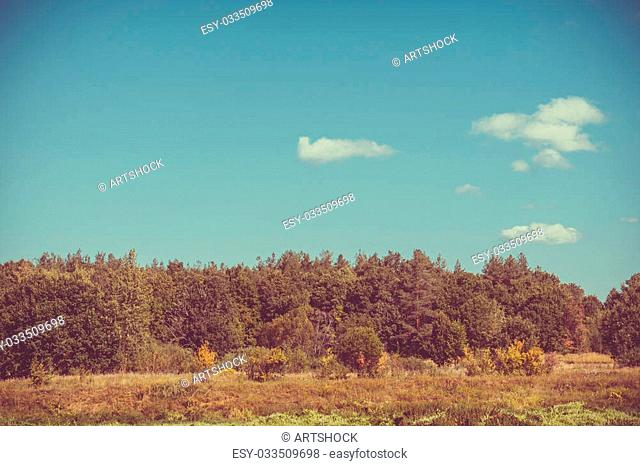 Blue sky and green forest, nice peaceful landscape, vintage effect