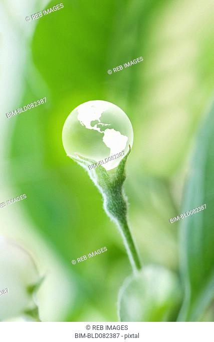 Glass globe resting on green stem