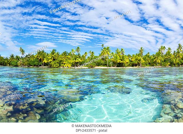Tropical reef in the coral gardens; Tahaa, French Polynesia