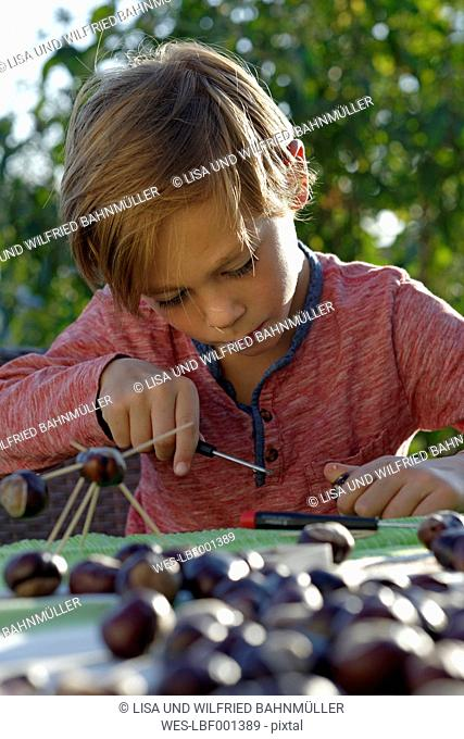 Little boy tinkering chestnut figurines