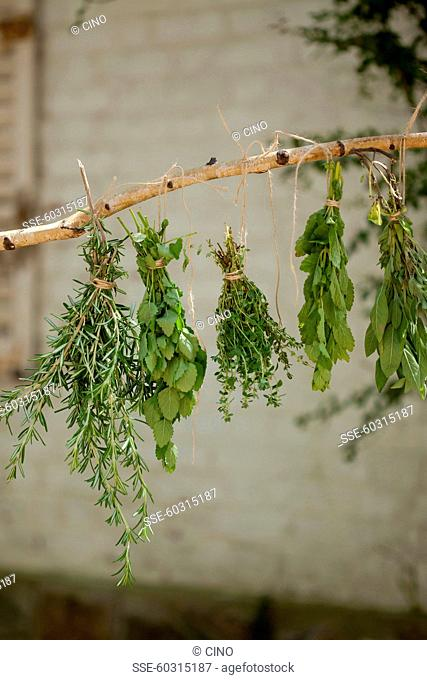 Bunches of herbs hanging to dry