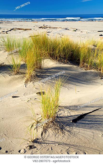 Dune grass, Bayocean Peninsula, Oregon