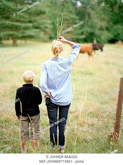 Mother and child visiting a horse paddock, Sweden