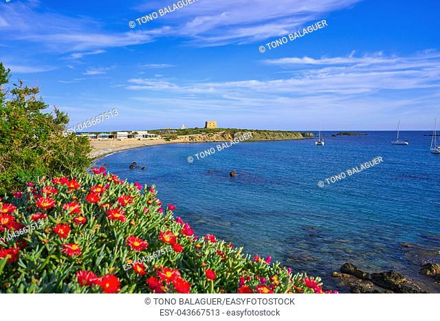 Nova Tabarca beach in Alicante of Spain and Mesembryanthemum flowers