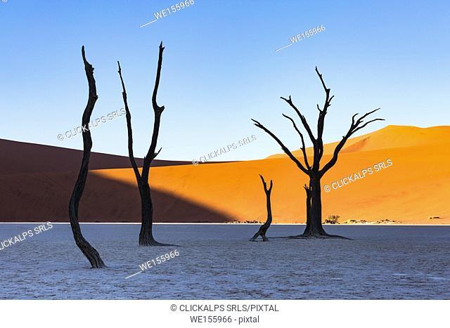 Dead Vlei, dead Acacia trees in the Namib desert at sunrise, Namibia. Africa