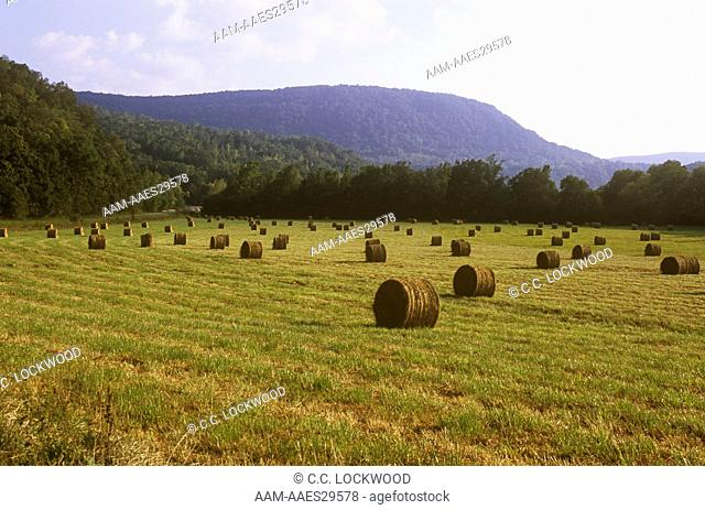Rolls of Hay in the Valley of the Ozark Mountains, Ponca, Arkansas