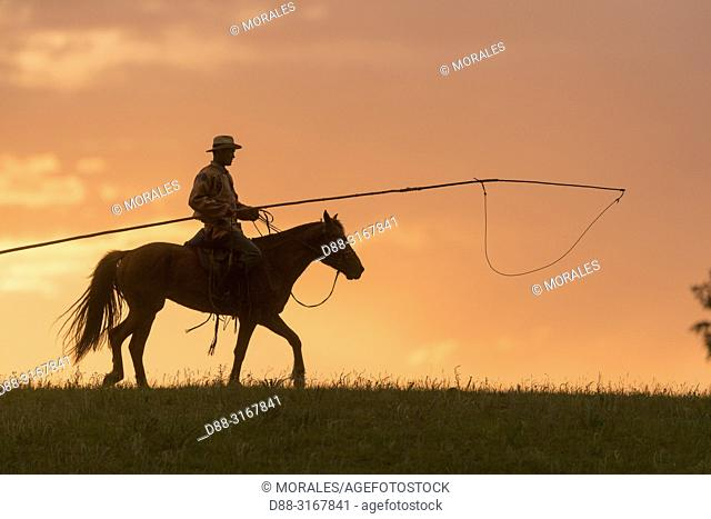 China, Inner Mongolia, Hebei Province, Zhangjiakou, Bashang Grassland, Mongol on a horse, with a catch lasso