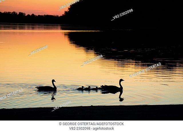 Batterson Park Pond sunrise with Canada goose, Batterson Park Pond State Boat Launch, New Britain, Connecticut