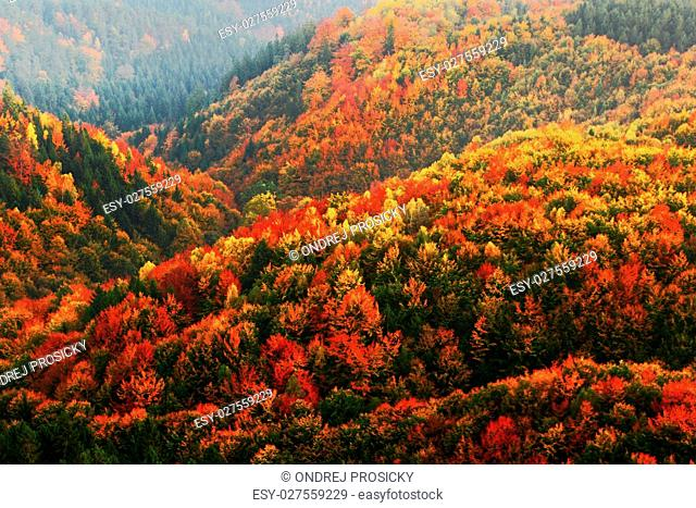 Beautiful orange and red autumn forest. Autumn forest