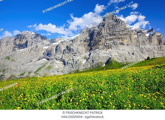 Wetterhorn mountain in the Bernese Oberland, Switzerland