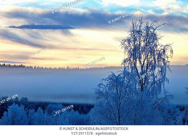 Hoarfrost covers the trees in a valley in the blue hour. Kubbe, Västernorrland, Sweden