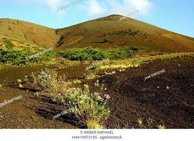 Ascension, Ascension Island, volcano, lava, sand, plants, pioneer plants, half desert