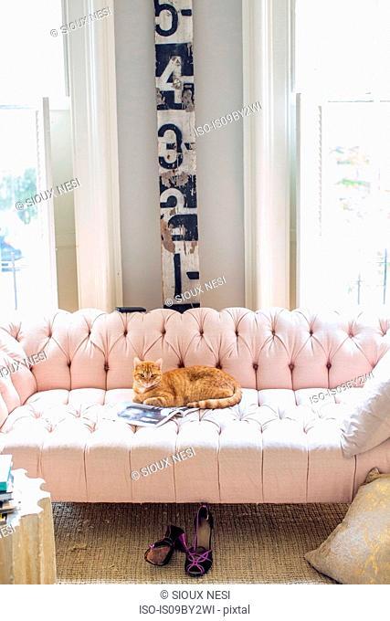 Ginger cat lying on stylish sofa, portrait