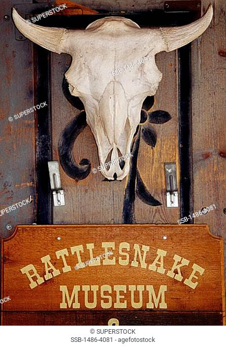 Rattlesnake Museum Albuquerque New Mexico, USA