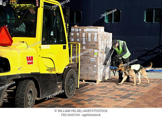 Drug sniffing dog and handler inspect butter bound for cruise ship, Old Port, Quebec City, Quebec, Canada