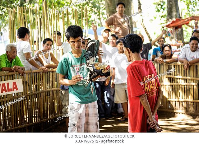 Man presenting his rooster before the fight, Puerto Princesa, Palawan, Philippines