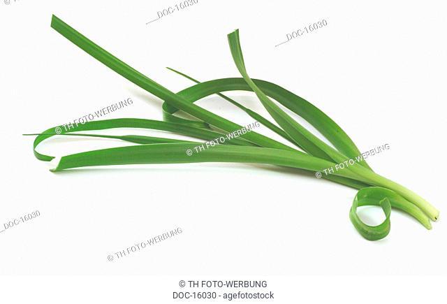 Sea squill - medicinal plant - Scilla maritima