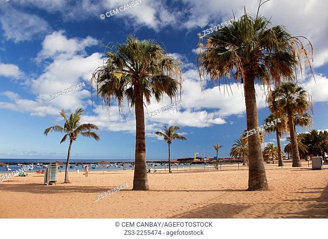 Palms in Playa de las Teresitas beach, Santa Cruz, Tenerife, Canary Islands, Spain, Europe