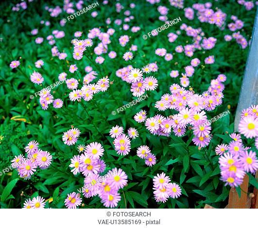 flower, season, plant, nature, spring, film