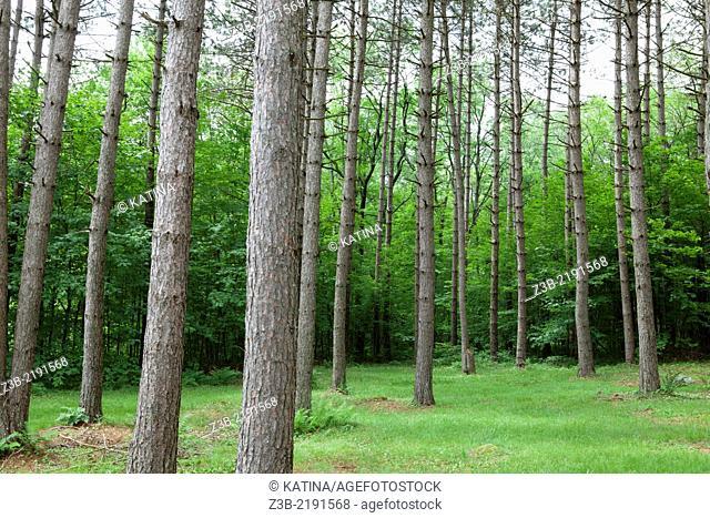 Woods near Ripton, VT, USA