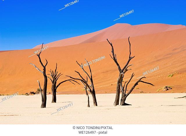 Dead Vlei, Sossusvlei, Namib Desert, Namib Naukluft Park, Namibia, Africa