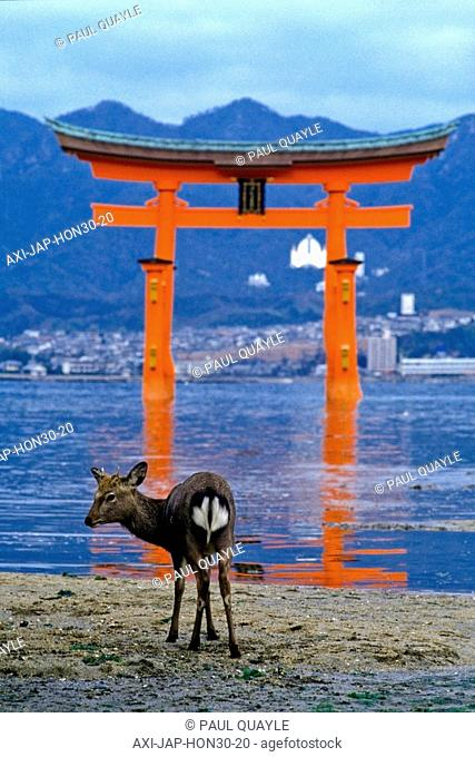 Deer standing at water edge with Tori Gate at Itsukushima Shrine in background