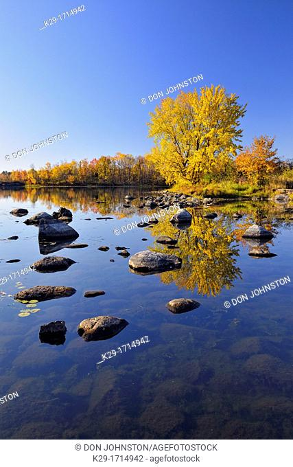 A mature autumn sugar maple reflected in the Vermilion River, Greater Sudbury Whitefish, Ontario, Canada