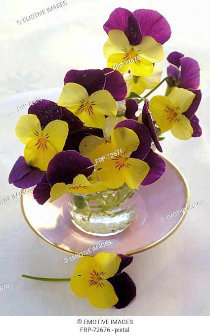 violas in a vase