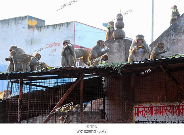 monkeys in The Sun Temple