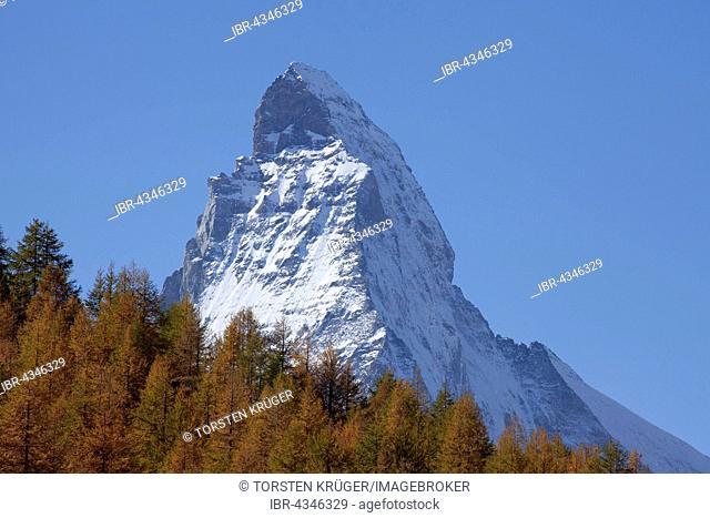 Snowy Matterhorn, autumnal trees, Zermatt, Canton of Valais, Switzerland