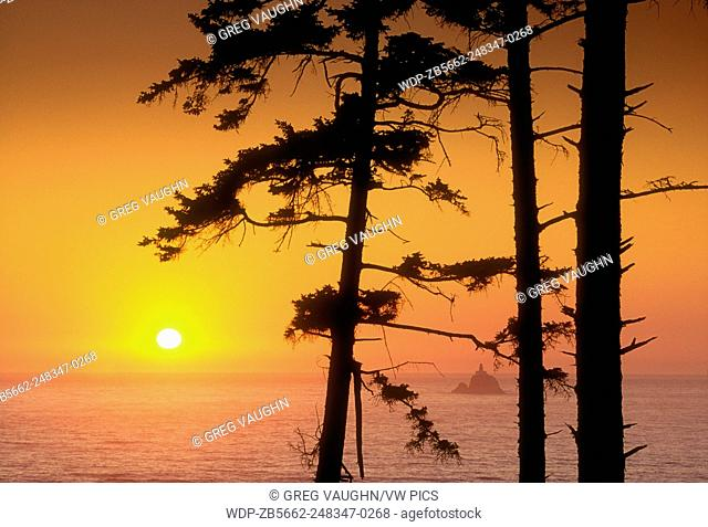 Sunset through trees at Ecola State Park, with Tillamook Rock Lighthouse offshore; .northern Oregon coast
