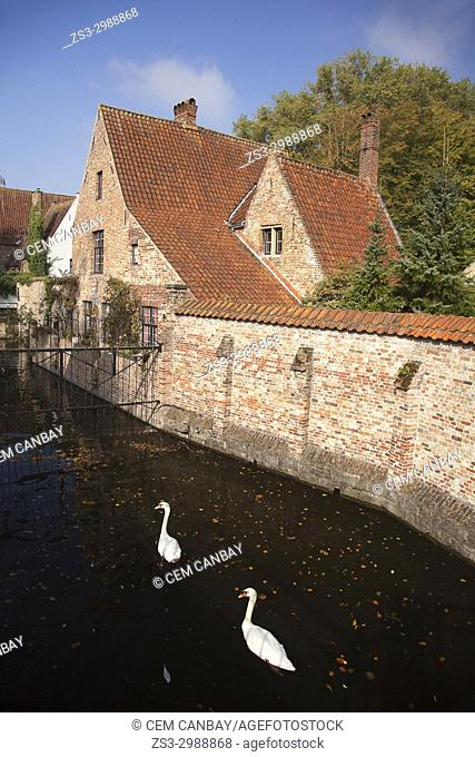 Pair of ducks in front of the traditional houses by the canal in the city center, Bruges, West Flanders, Belgium, Europe
