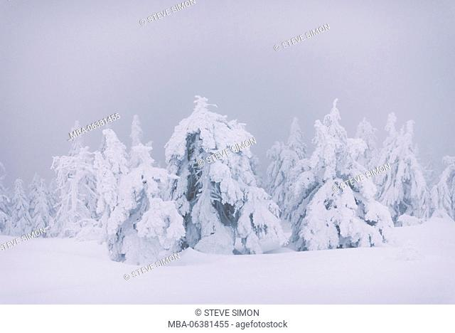 Tree sculptures, Brocken (mountain), Harz, Schierke, Germany