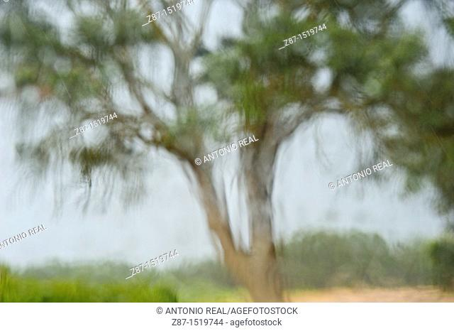 Tree out-of-focus, Almansa, Albacete, Spain