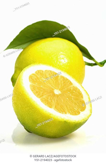 Yellow Lemon, citrus limonum, Fruit against White Background