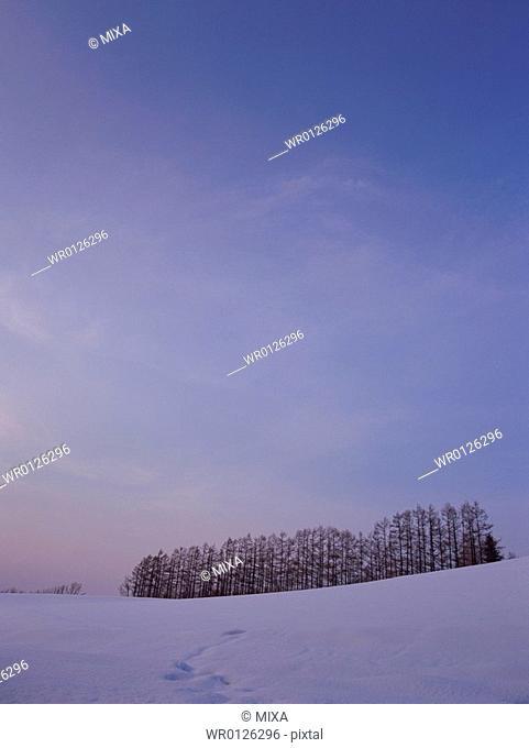 Snow-covered field in Hokkaido, Japan