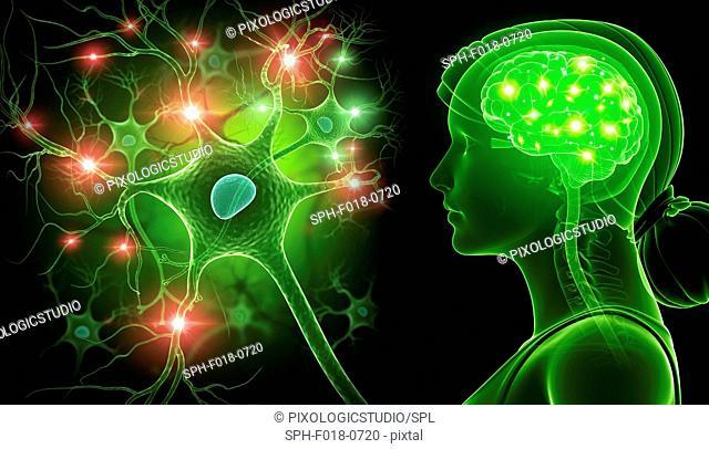 Brain and nerve cells, illustration