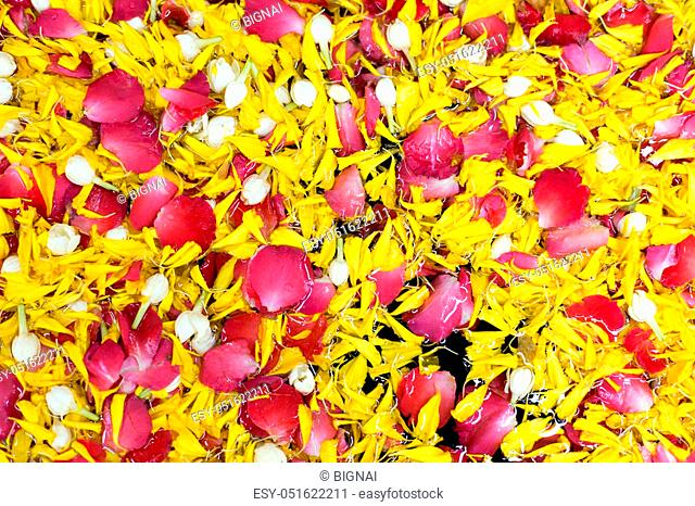 Background petal flower rose, jasmin in water blow in Songkran festival Thail tradition