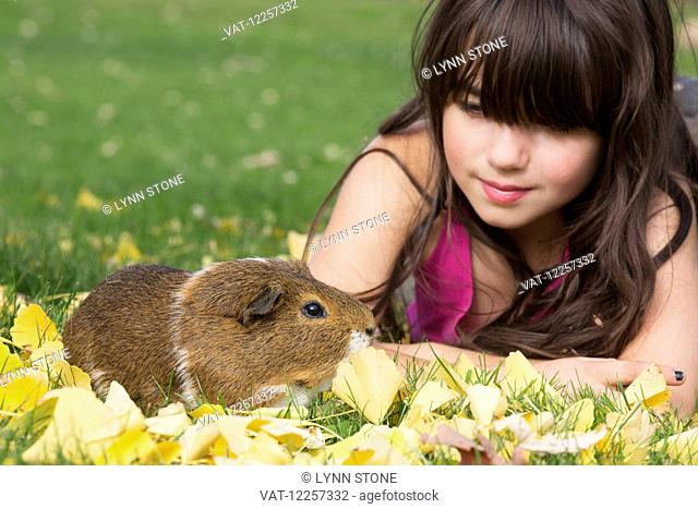 Young girl with guinea pig on fallen leaves in grass; Higganum, Connecticut, United States of America