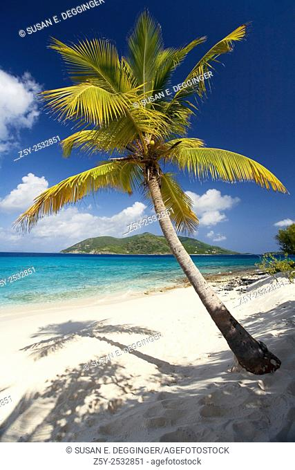 Palm Tree on Sandy Island, British Virgin Islands