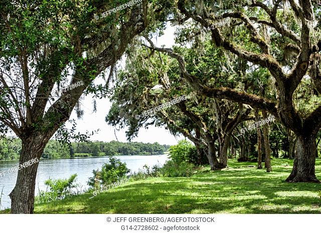 Florida, Hendry County, La Belle, Caloosahatchee River, Bob Mason Waterfront Park, public park, tree, live oak, Spanish Moss